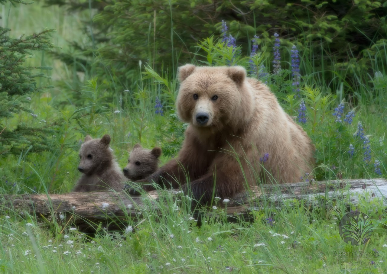 Quest for the Spirit Bear with Wildlife Adventures