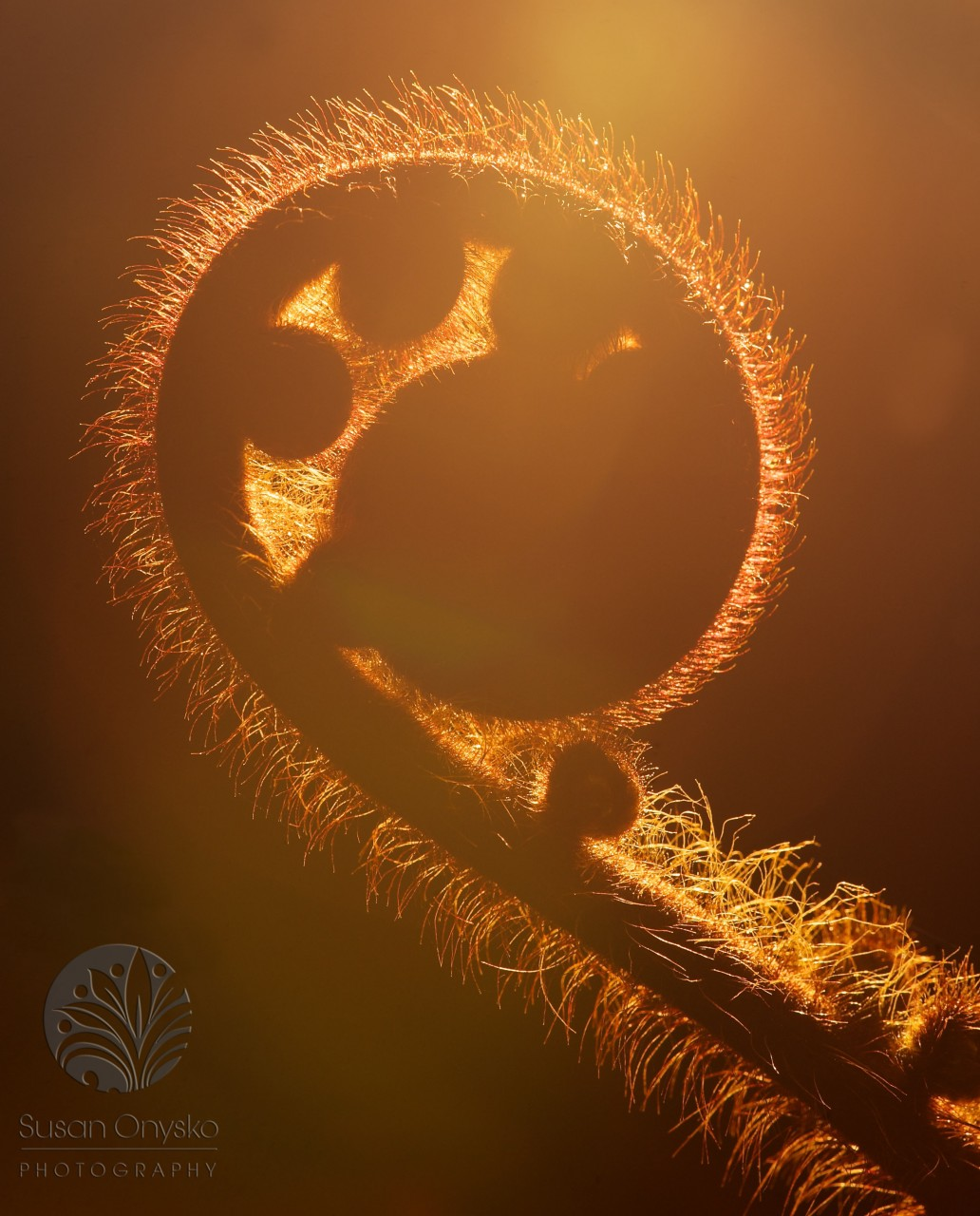 SusanOnyskoPhoto_Magical-Fiddlehead-Light