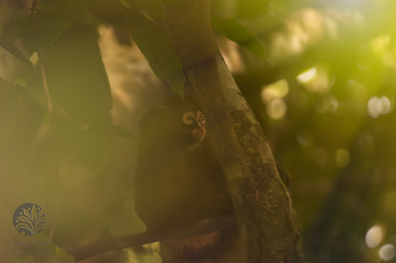 """Jungle Beauty"", Costa Rica 2015"